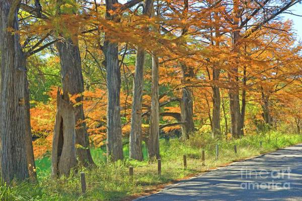 Wall Art - Photograph - Roadside Cypress by Robert Anschutz
