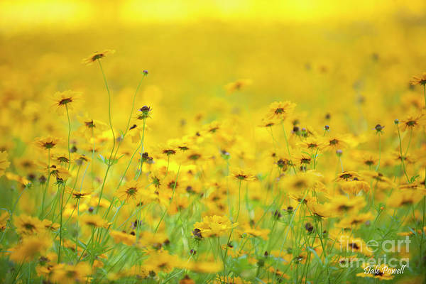 Photograph - Roadside Flowers by Dale Powell