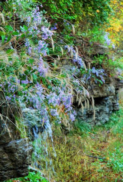 Photograph - Roadside Flowers by Sam Davis Johnson