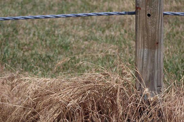 Photograph - Roadside Grasses by Colleen Cornelius