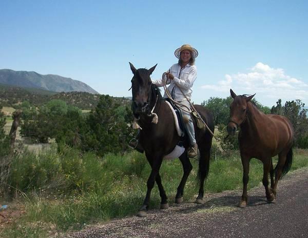 Photograph - Roadside Horses by Anita Burgermeister