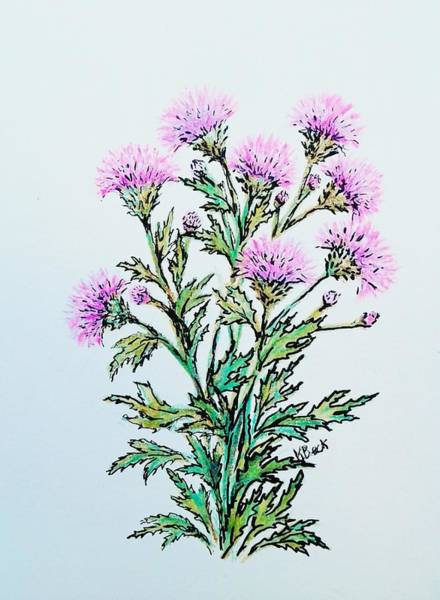 Weeds Drawing - Roadside Thistles by Katherine Young-Beck