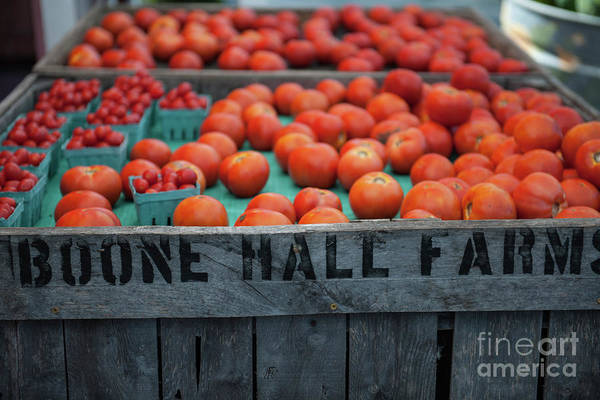 Photograph - Roadside Tomatoes by Dale Powell