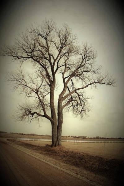 Wall Art - Photograph - Roadside Tree by Toni Grote