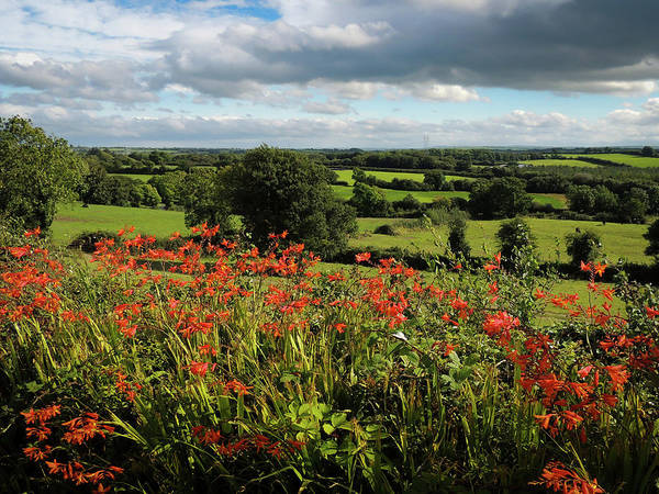Photograph - Roadside Wildflowers In County Clare by James Truett