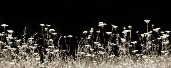 Wall Art - Photograph - Roadside Wildflowers by Lori Deiter