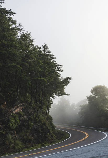 Photograph - Roadway In Georgia #fog #nature #scene by Andrea Anderegg