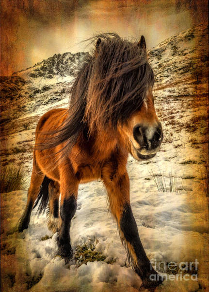 Ponies Photograph - Roaming Free by Adrian Evans
