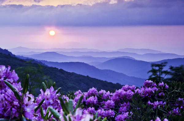 Rhododendrons Photograph - Roan Mountain Sunset by Rob Travis