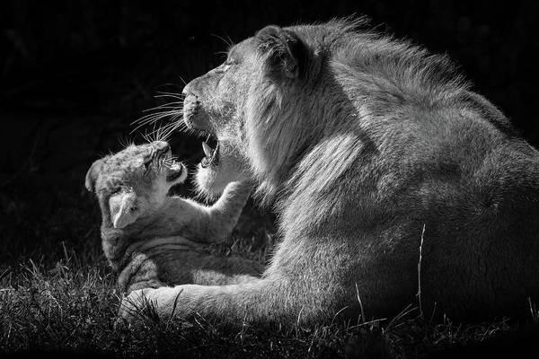 Photograph - Roar Practice by Tazi Brown