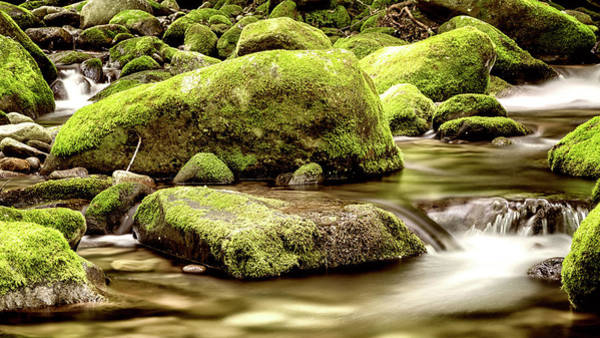 Wall Art - Photograph - Roaring Fork Mossy Rocks - Toned Sepia by Stephen Stookey
