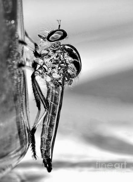 Ugly Photograph - Robber Fly - Black And White by Kaye Menner