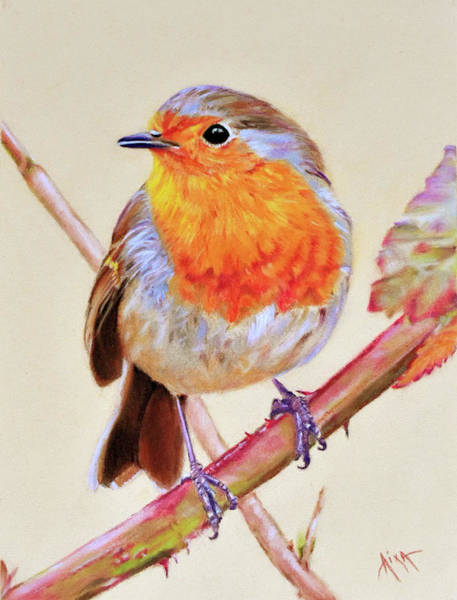 Wall Art - Painting - Robin by Aixa Renta-DeLuca