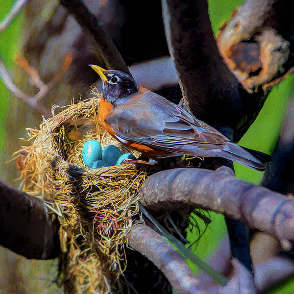 Robin Egg Blue Photograph - Robin And Her Eggs by Dale Jackson