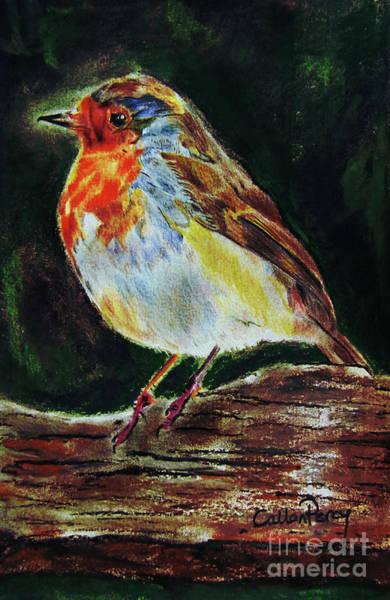 Avian Drawing - Robin by Callan Art