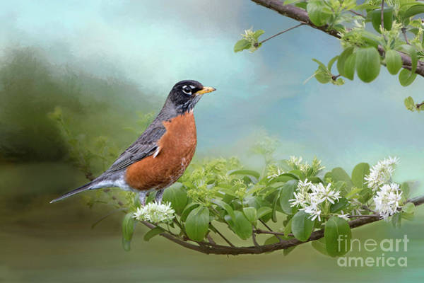 Wall Art - Photograph - Robin In Chinese Fringe Tree by Bonnie Barry