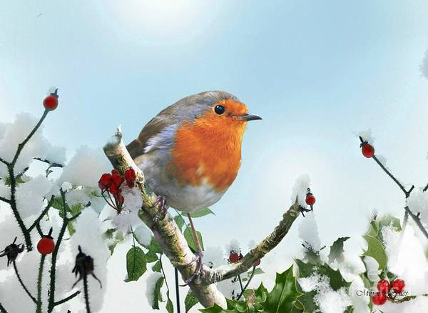 Mixed Media - Robin In The Snow by Morag Bates
