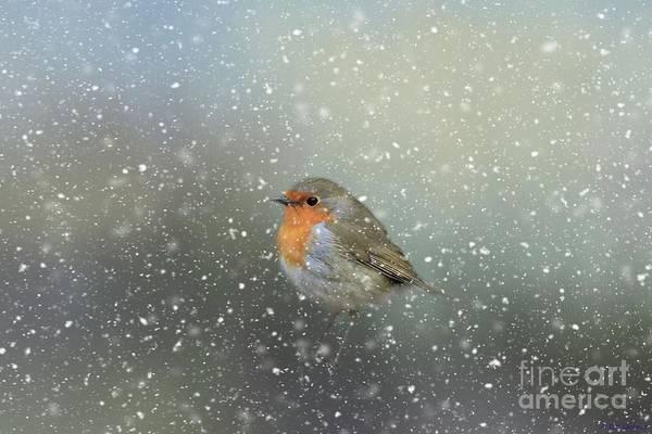 Robin In Winter Art Print