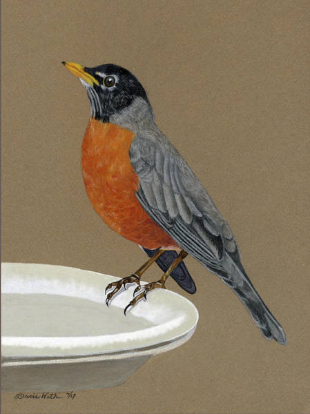 Wall Art - Drawing - Robin by Laurie With