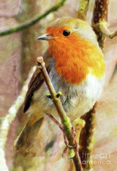 Wall Art - Painting - Robin Red Breast by Sarah Kirk