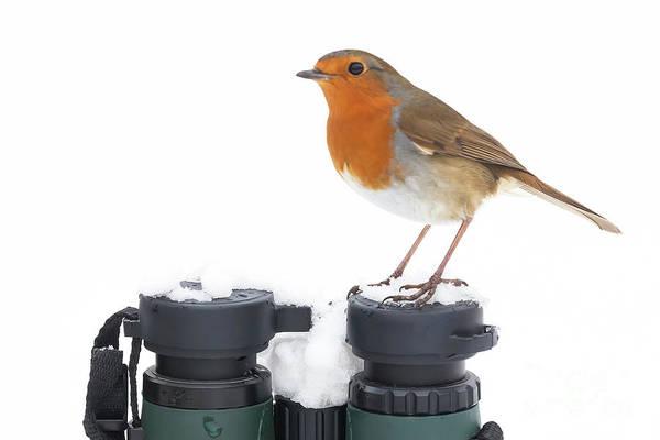 European Robin Photograph - Robin Wildbird Sat On Binoculars In Winter by Simon Bratt Photography LRPS