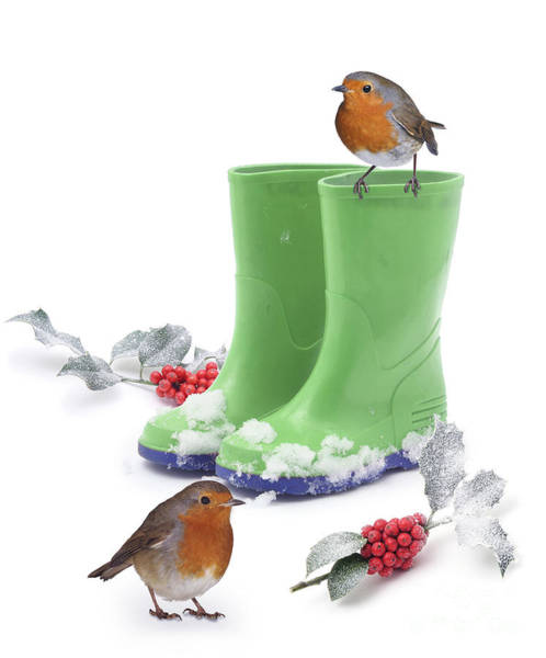 Photograph - Robins And Green Wellies by Warren Photographic