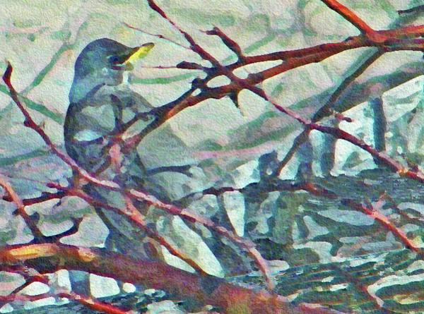 Suggestion Photograph - Robins Impression Of Spring by Lenore Senior