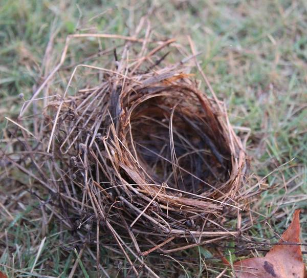 Wall Art - Photograph - Robin's Nest After Storm by Weathered Wood
