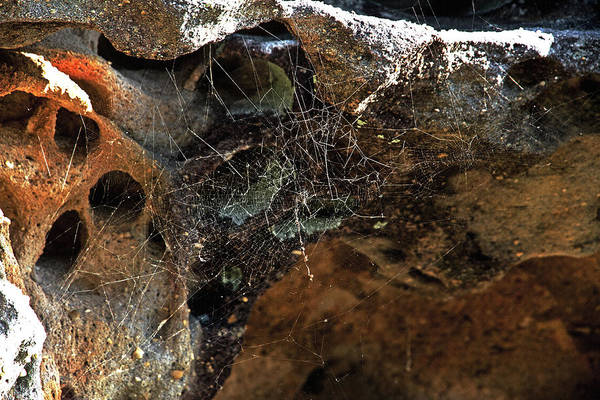 Spider Rock Photograph - Rock Abstract With A Web by Miroslava Jurcik