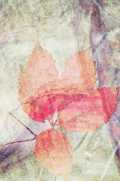 Photograph - Rock And Leaf Composite 2 by Elaine Teague