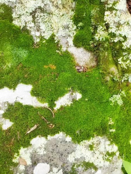 Photograph - Rock Carpet by Rachel Hannah