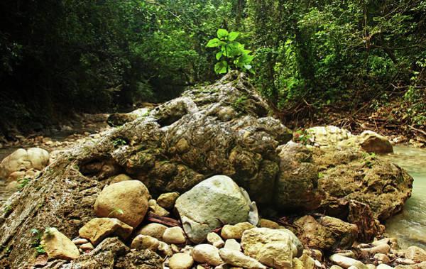 Puerto Plata Photograph - Rock Centerpiece Rio Damajagua by Debbie Oppermann