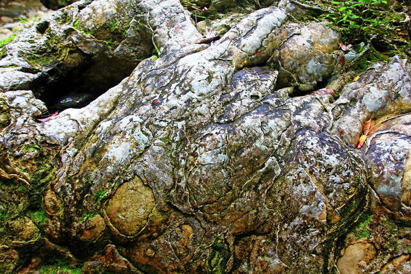 Puerto Plata Photograph - Rock Formation Rio Damajagua by Debbie Oppermann