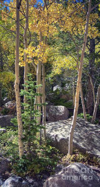 Photograph - Rock Garden 2 by Pete Hellmann