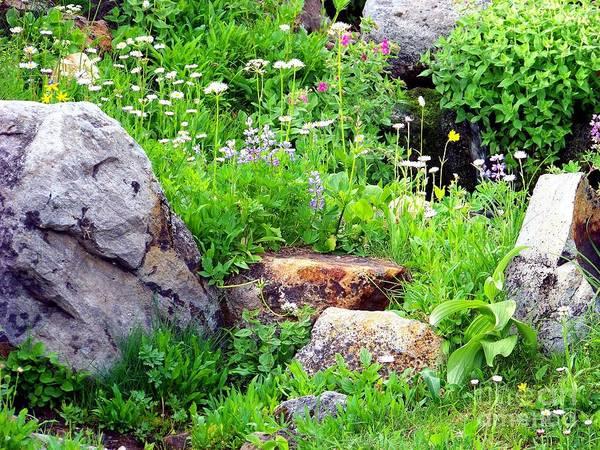 Photograph - Rock Garden by Charles Robinson