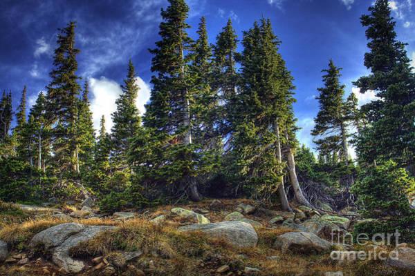 Photograph - Rock Garden by Pete Hellmann