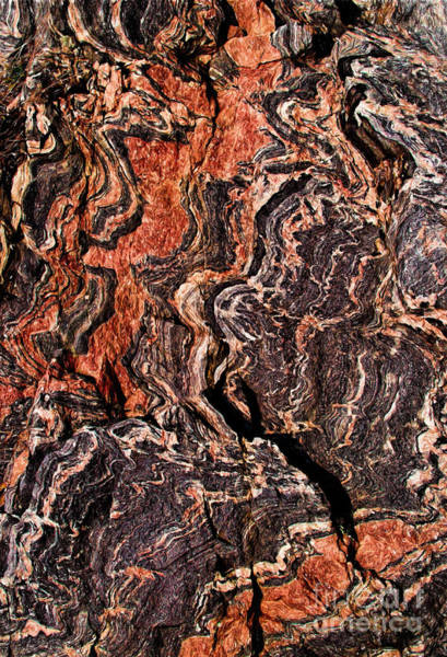 Photograph - Rock Veins by Les Palenik