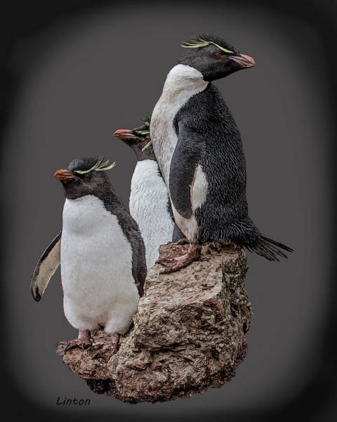 Digital Art - Rockhopper Penguins by Larry Linton