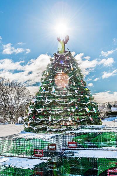 Sullivan County Photograph - Rockland Trap Tree by Tim Sullivan