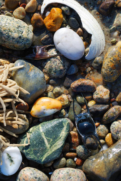 Photograph - Rocks And Shells On Sandy Neck Beach by Charles Harden
