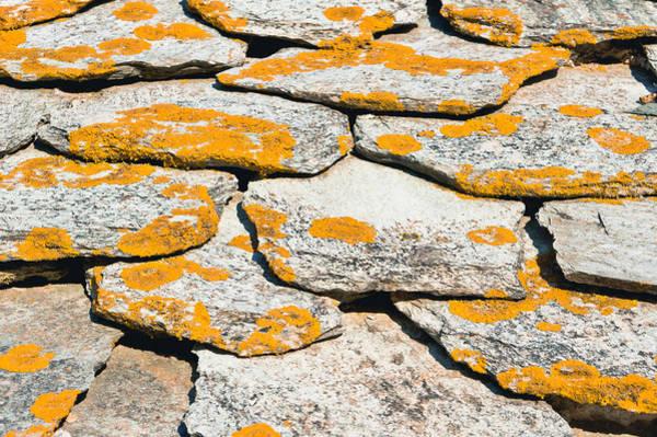 Orange Lichen Photograph - Rocks With Lichen by Tom Gowanlock