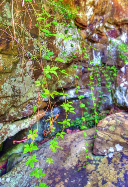 Photograph - Rockwall Vines by Sam Davis Johnson
