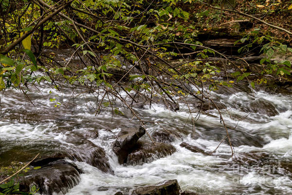 Photograph - Rocky Flow by William Norton