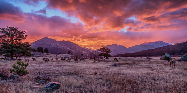 Photograph - Rocky Mountain Sunrise by Susan Rissi Tregoning