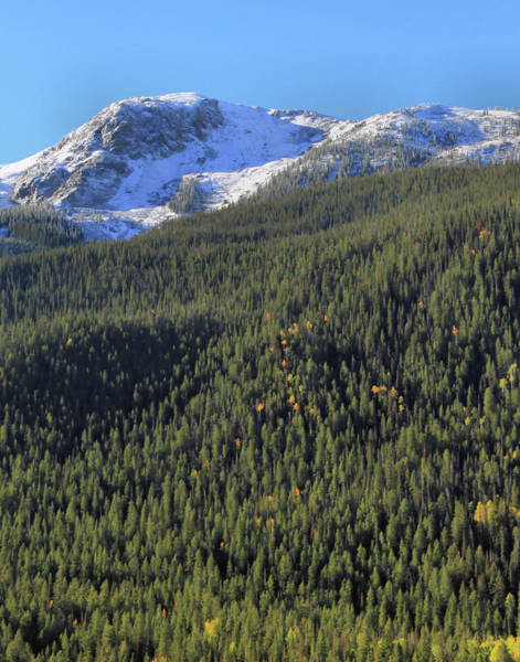 Photograph - Rocky Mountain Evergreen Landscape by Dan Sproul