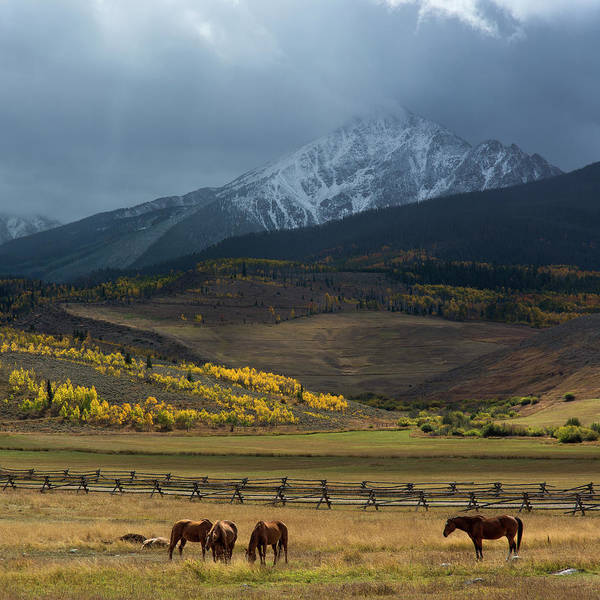 Photograph - Rocky Mountain Horses by Aaron Spong