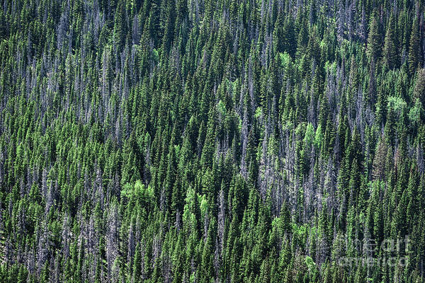 Wall Art - Photograph - Rocky Mountain National Park by John Greim