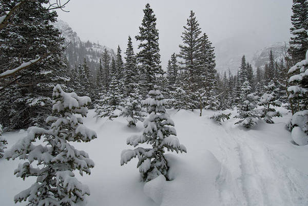 Photograph - Rocky Mountain National Park Winter Beauty by Cascade Colors
