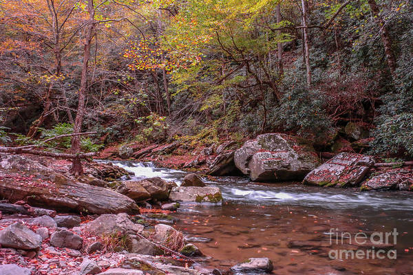 Photograph - Rocky Mountain Stream by Tom Claud