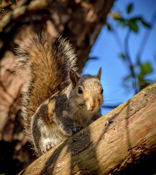 Flagler Photograph - Rocky The Squirrel by Shawn Foley